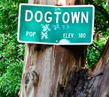 Where the Heck is Dogtown ?